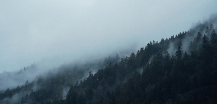 fog in forest 2